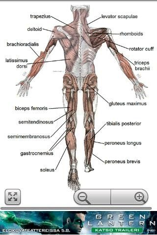 Human Anatomy pour Android